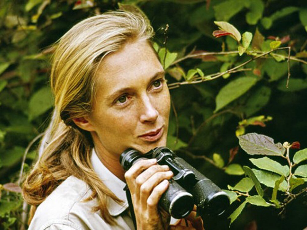 Mentor from Afar, Dr. Jane Goodall